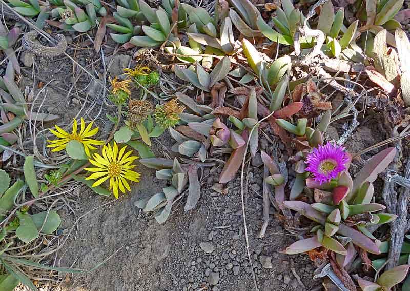 Bild 20 Blumen im Sand