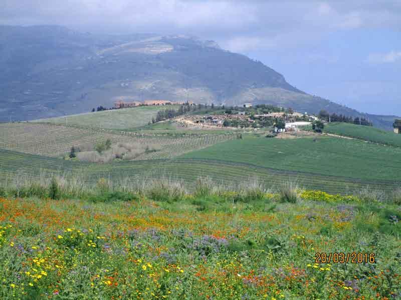 Blick ins Tal von Segesta