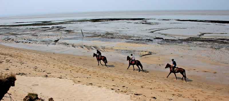 Bild 5 Pferdeausreiten am Strand von Dragey Ronthon