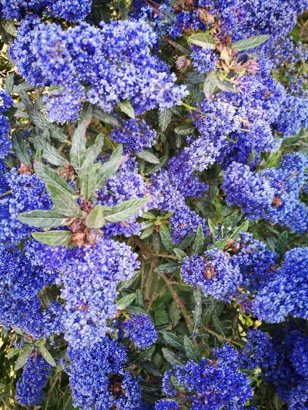 Bild 42 Blumen im Garten von Clerval