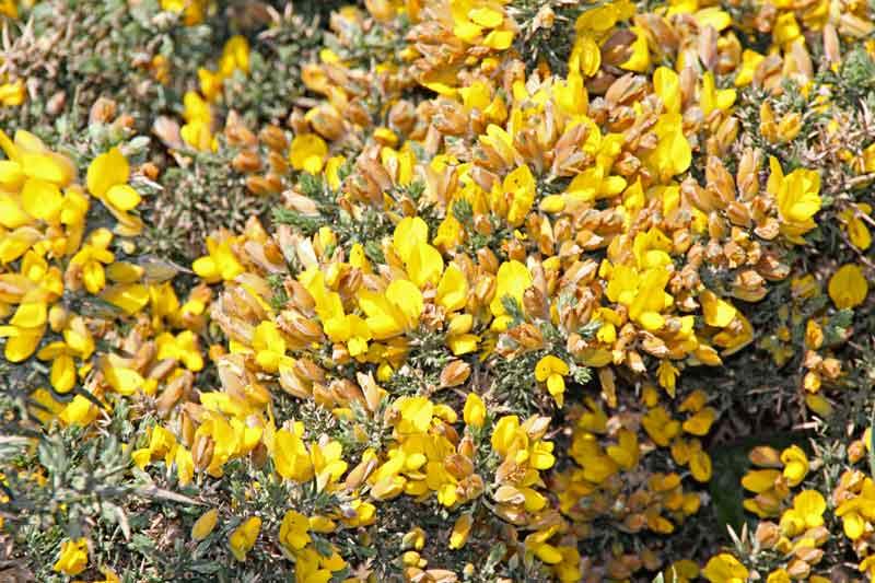 Bild 25 Blumen auf der Landzunge Pointe du Grouin