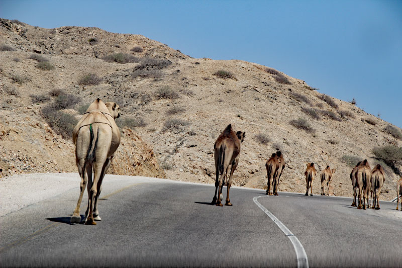 Bild 14 Blick auf die Straße, Kamele sind unterwegs
