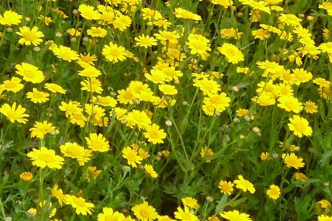 Bild 19 Pflanzen auf der Levadawanderung