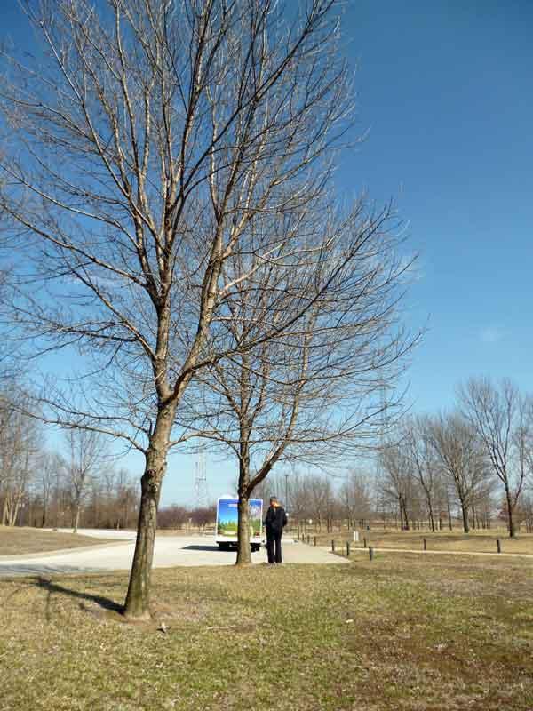 Bild 8 Parkplatz am Zusammenfluss von Mississippi und Missouri (Confluens)