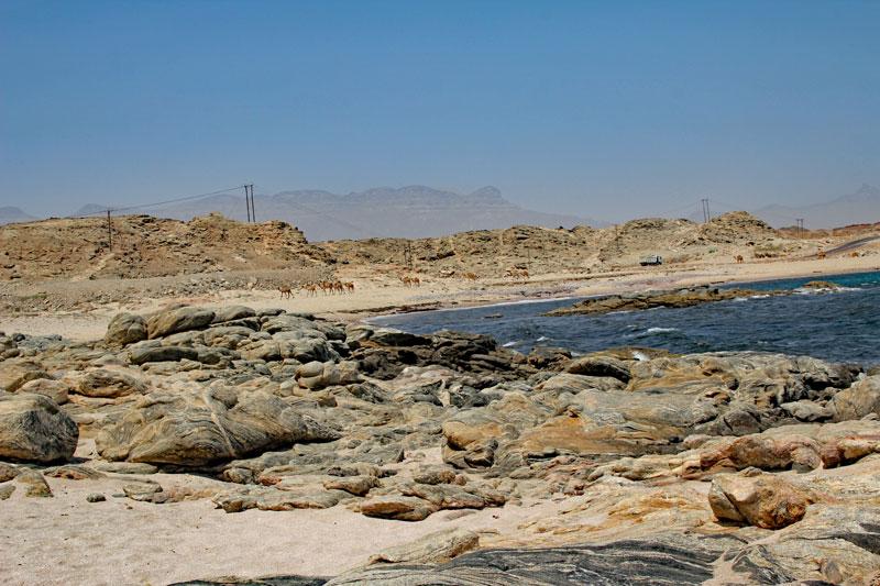 Bild 3 Pause und Füße baden auf dem Weg in Richtung Muscat eine Kamelherde zieht langsam vorbei