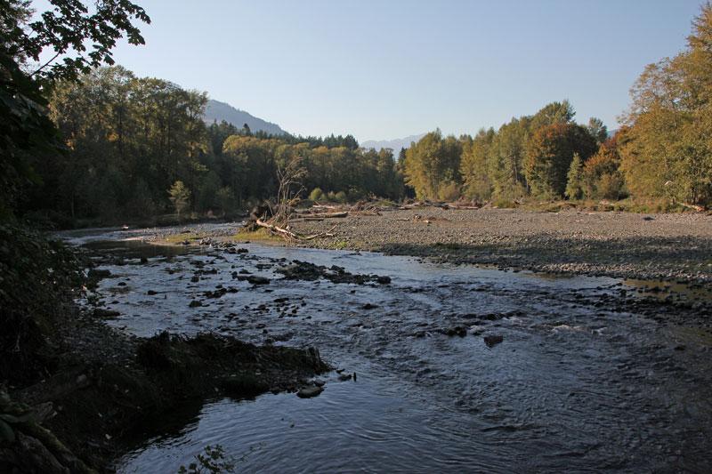Bild 14 Tote Lachse am Dosewallip Fluß direkt neben dem Campground