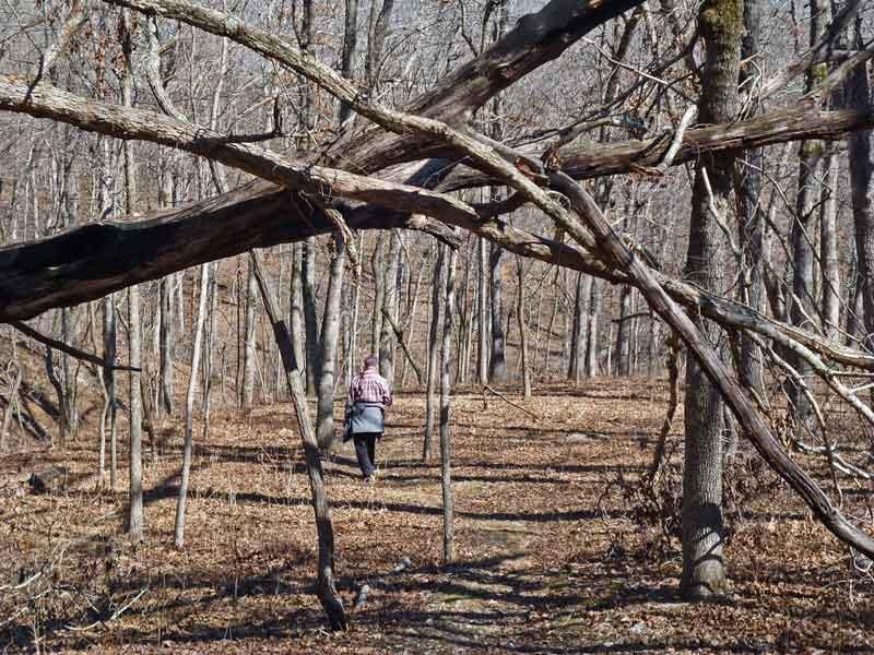 Bild 11 Unterwegs auf dem Oak Trail im Ondanaga State Park