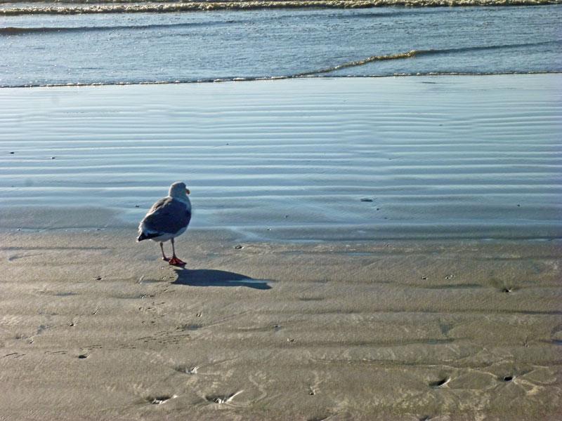 Bild 21 Möwen begleiten uns bei der Strandwanderung am Ocean City Campground