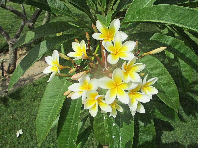 Bild 3 Blumen in der Rotana Hotelanlage