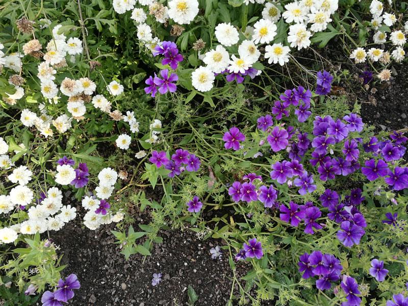 """Bild 27 Bummel durch den Garten """"Jardin de Metis"""""""