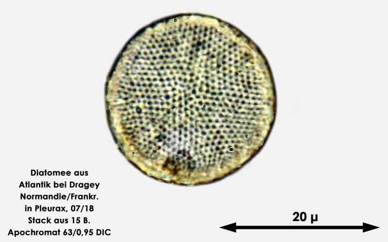 Bild 39 Diatomee aus dem Atlantik bei Draghey de Monton (Normandie). Gattung: Coscinodiscus sp.