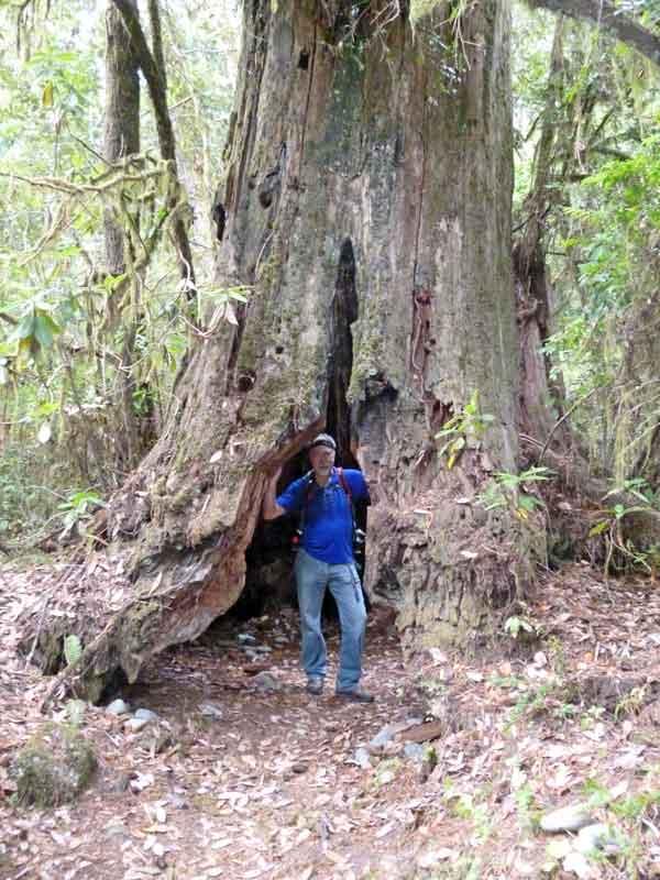 Bild 26 Hohler Baum auf der Wanderung parallel zum Smith River in den Redwoods auf dem Hiouchi Trail