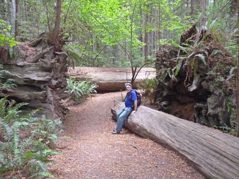 Bild 21 Pause in den Redwoods auf dem Hiouchi Trail