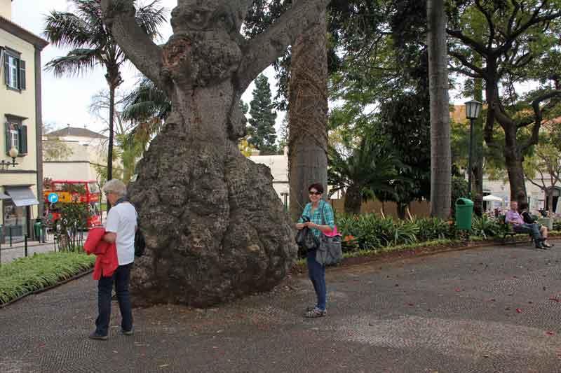 Bild 34 In einem Park von Funchal