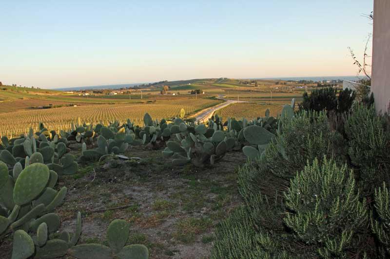 Blick von der Foresteria Planeta bei Menfi