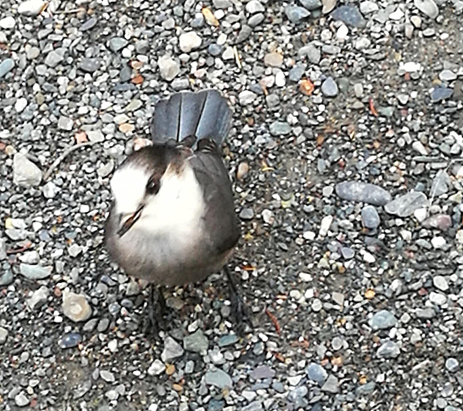 Bild 21 Vögel mit Nüssen füttern am Stellplatz