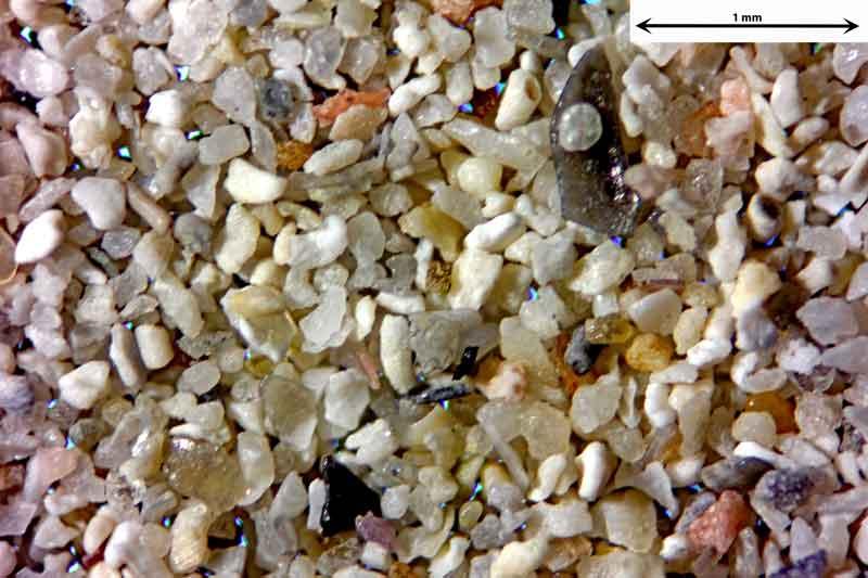 Bild 4 Sand aus Santanyi-Mallorca/Spanien, vom Badestrand Objektiv Zeiss Plan 2,5/o,o8 Auflicht und Durchlicht