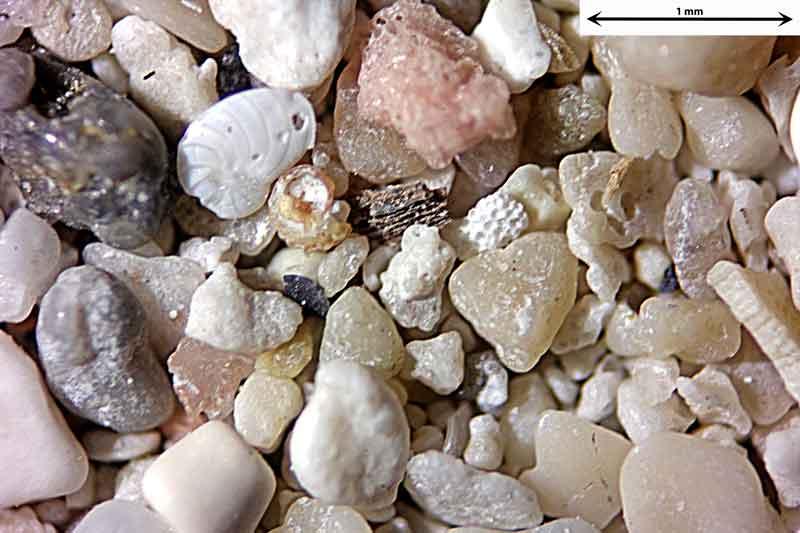 Bild 2 Sand aus Alcudia/Mallorca/Spanien Badestrandtrand, Objektiv Zeiss Plan 2,5/o,o8 Auflicht