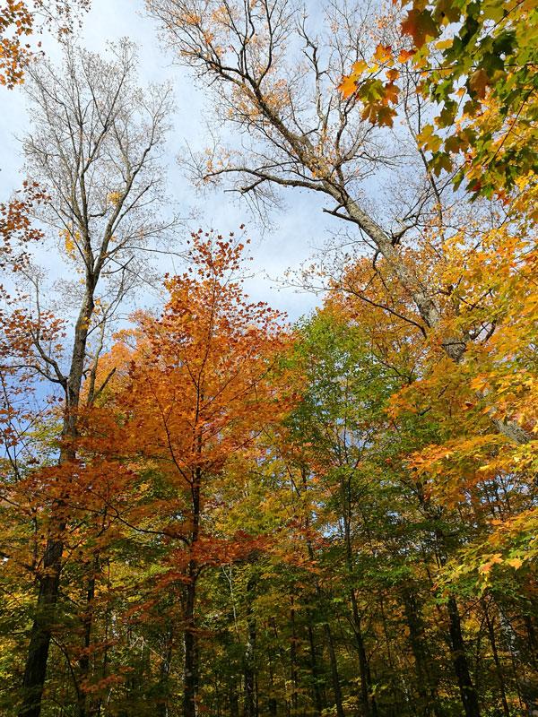 Bild 10 Der Wald ist herbstlich gefärbt
