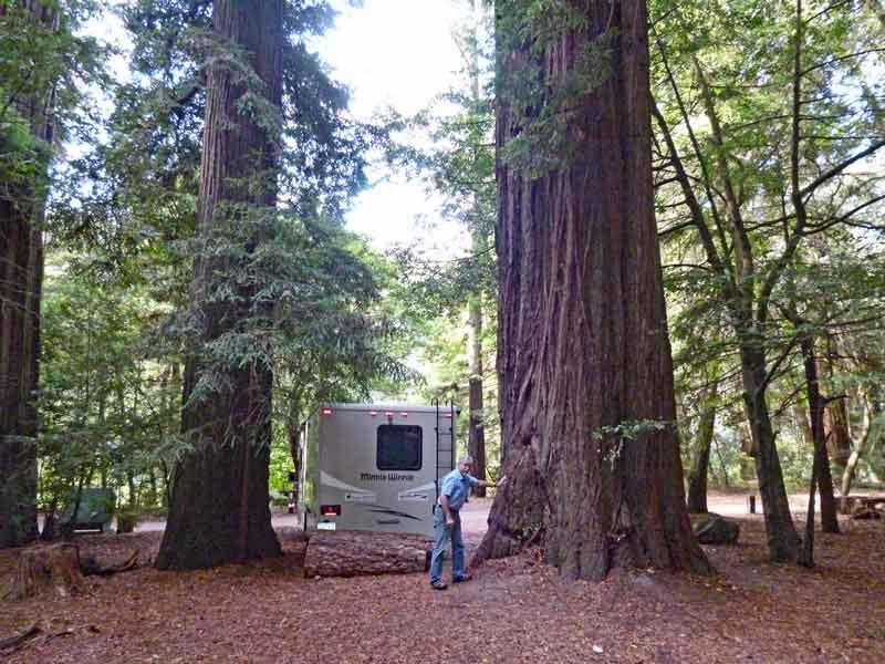 Bild 20 Stellplatz zwischen den Riesenredwoods