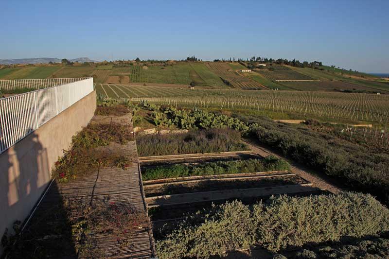 Blick von der Foresteria Planeta bei Menfi auf die Gewürzbeete
