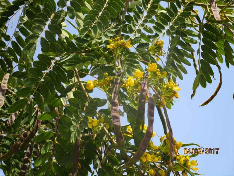 Bild 11 Blumen im Qurum Park in Muscat