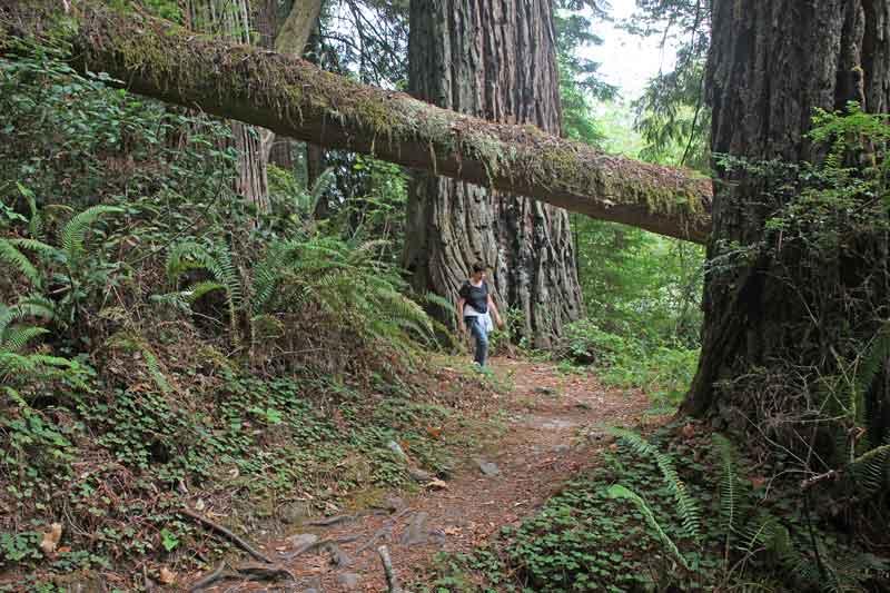 Bild 23 Wanderung parallel zum Smith River in den Redwoods auf dem Hiouchi Trail