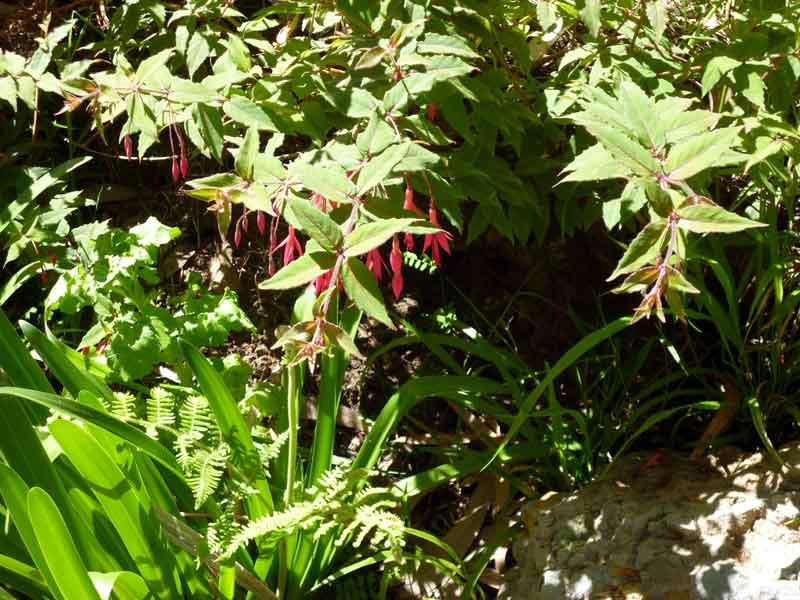 Bild 7 Blumen am Rande der Levada