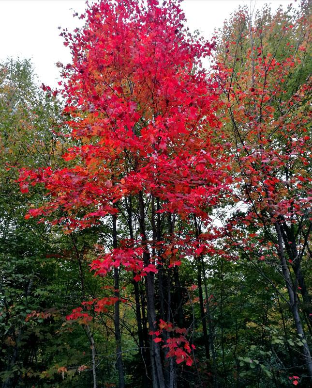 Bild 7 Herbstwald in Ontario