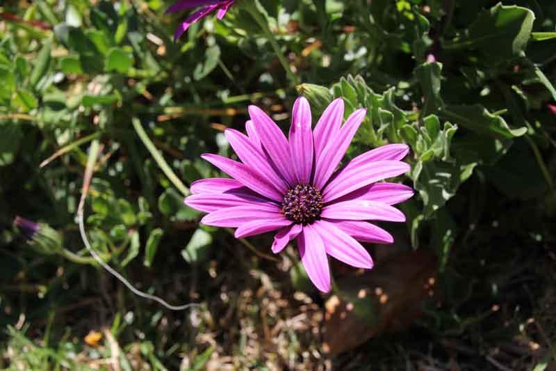 "Bild 8 Blumen vor unserem Bungalow im Hotel ""Jardim Atlantico"""