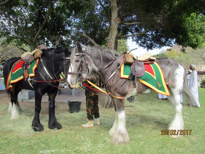 Die Pferde des Sultans vor der Parade