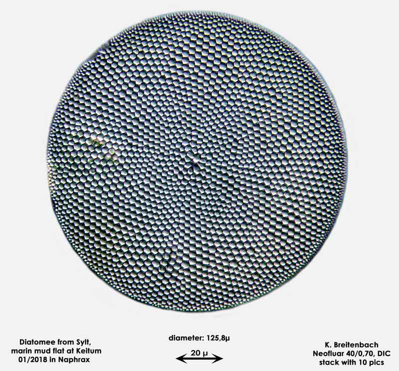 Bild 27 Diatomee aus Sylt/Keitum Watt, Art: Coscinodiscus pavillardii Forti 1922