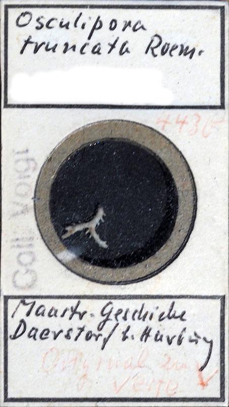 Bild 1: Etikett des Präparats von E. Voigt