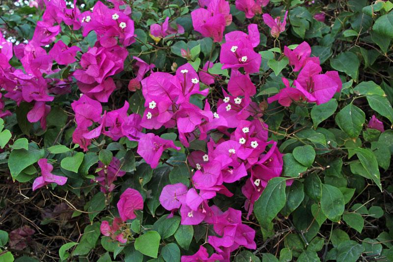 Blumen überall am Rande des Parks