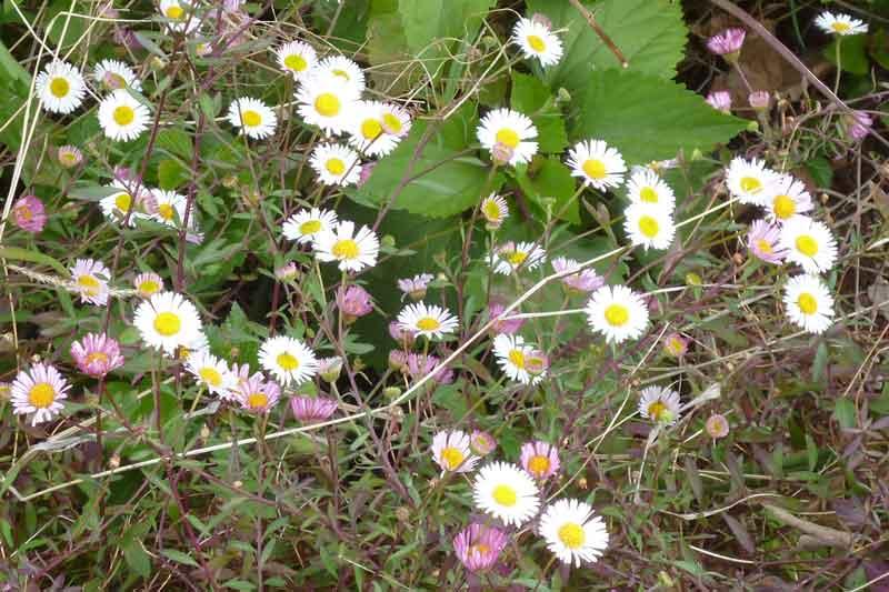 Bild 18 Pflanzen auf der Levadawanderung