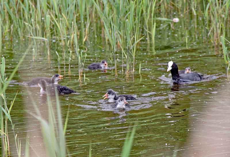 Bild 13 Vögel im Parc du Marquenterre