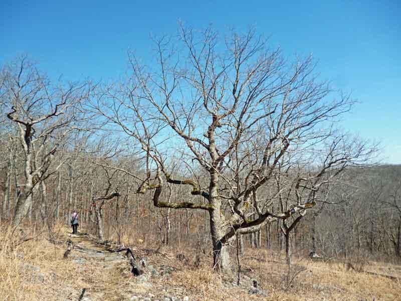 Bild 8 Unterwegs auf dem Oak Trail im Ondanaga State Park