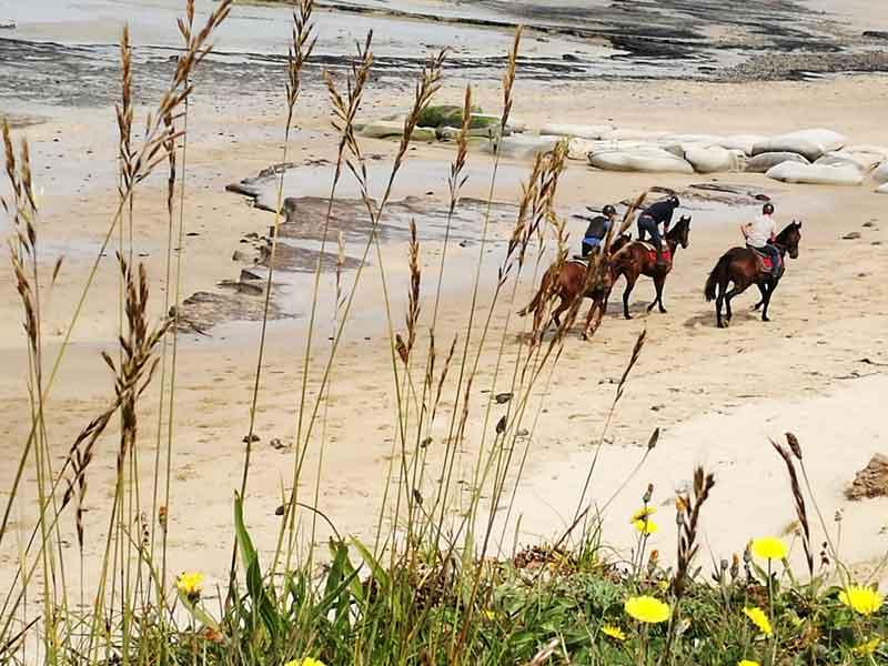 Bild 3 Pferdeausreiten am Strand von Dragey Ronthon