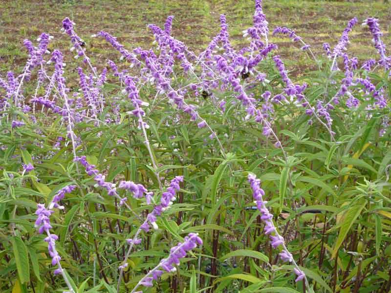 Bild 20 Pflanzen auf der Levadawanderung