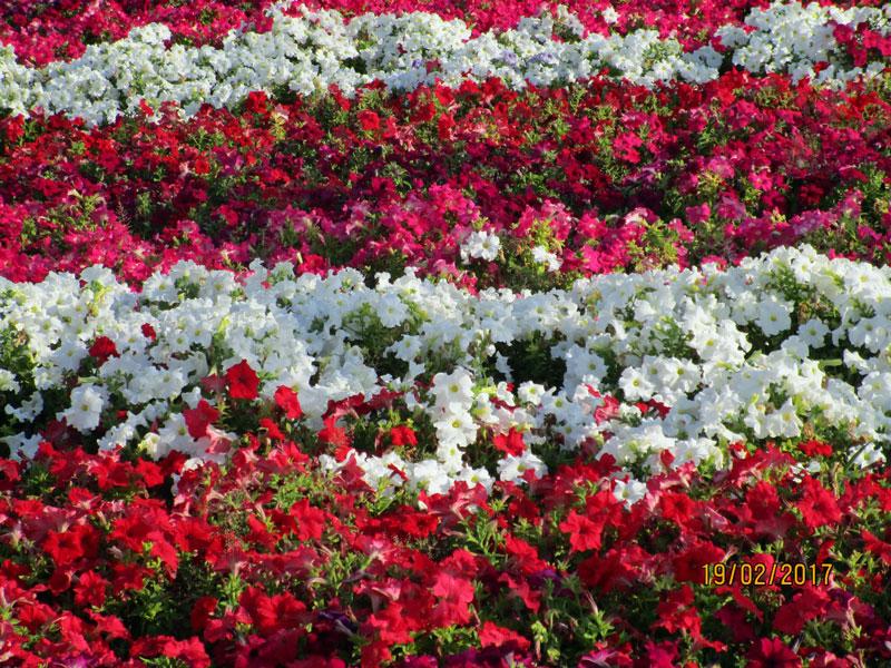 Blumen überall auf dem Weg