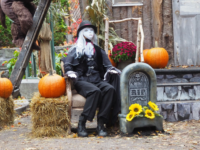 Bild 11 Überall ist geschmückt für Halloween