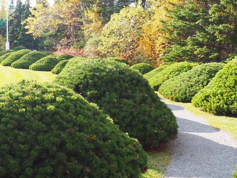 """Bild 26 Bummel durch den Garten """"Jardin de Metis"""""""