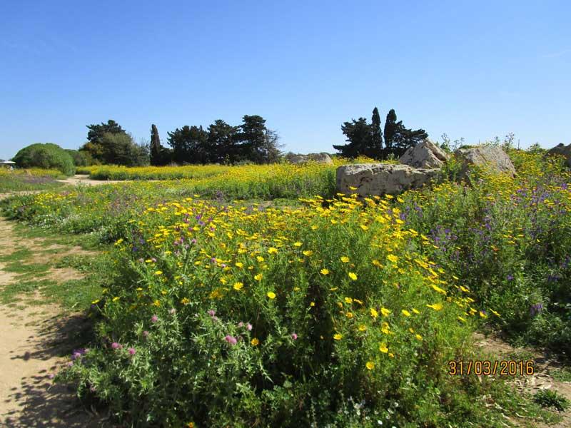 Blumen im Vordergrund und Blick auf die Tempelanlage in Selinunte