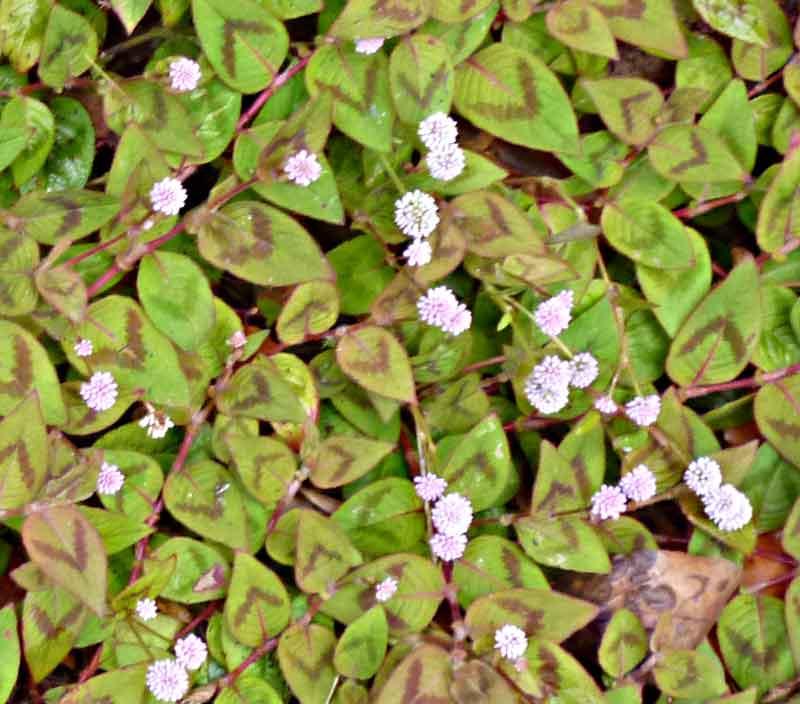 Bild 22 Blumen und Pflanzen unterwegs am Levadarand