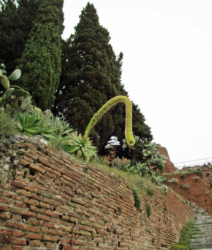 Pflanzen in der Alcantara Schlucht am Ätna
