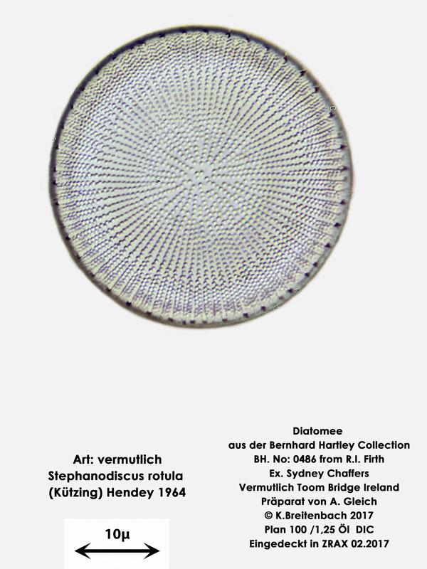 Bild 3b Diatomee aus Toomebridge Irland, Süßwasser Art: vermutlich Stephanodiscus rotula (Kützing) Hendey 1964