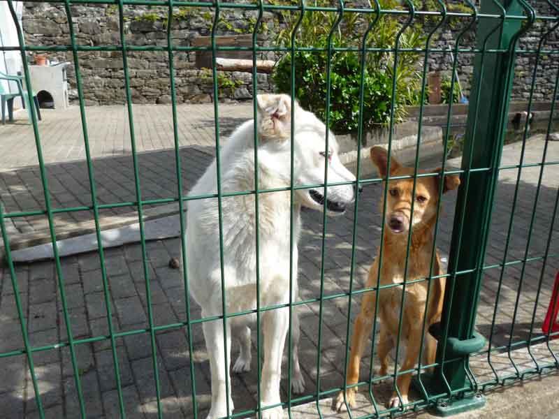 Bild 15 Hunde auf der Levadawanderung