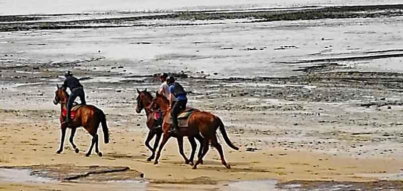 Bild 2 Pferdeausreiten am Strand von Dragey Ronthon