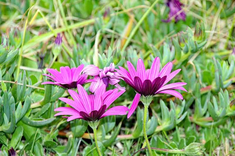 Bild 13 Pflanzen vor unserer Hausterrasse