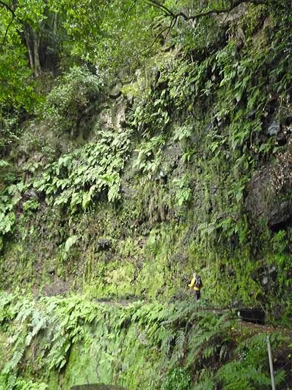 Bild 9 Unterwegs auf der Levada da Ribeira